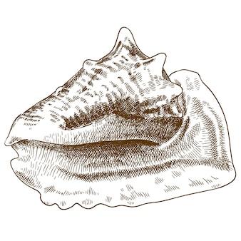 Gravure tekening illustratie van grote schelp
