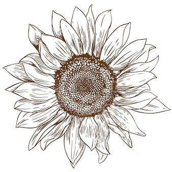Gravure tekening illustratie van grote zonnebloem