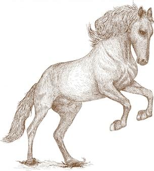 Gravure tekening illustratie van paard