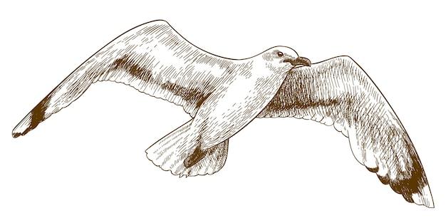 Gravure tekening illustratie van vliegende meeuw