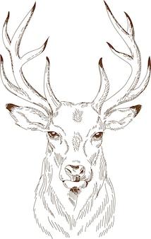 Gravure tekening van herten