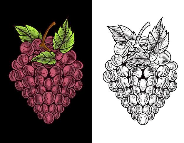 Gravure van druivenfruit