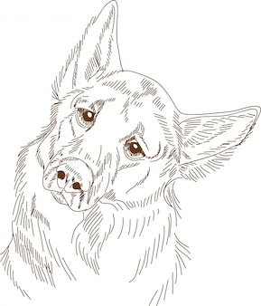 Gravure van tekening van hond