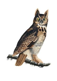 Great horned owl illustratie