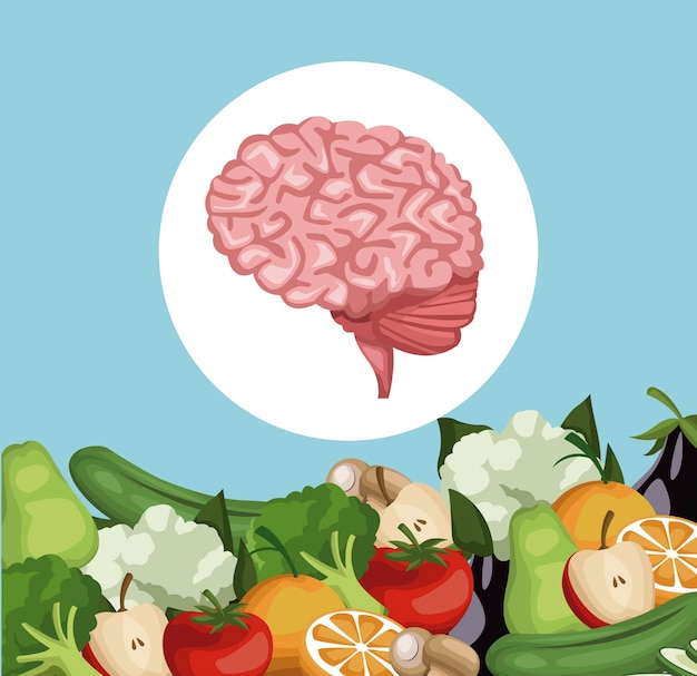 Grens groenten en fruit gezond voedsel tot hersenorgel