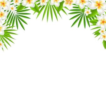 Grens van frangipani, met verloopnet,