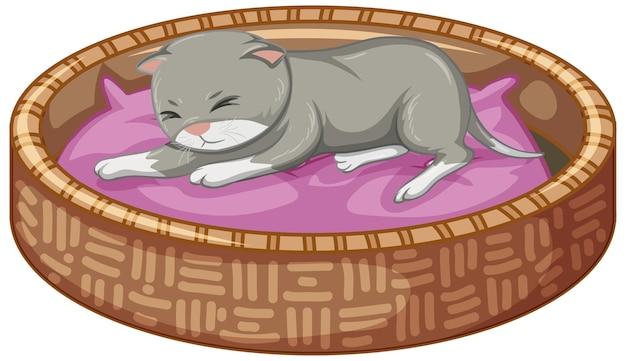 Grijze kitten liggend op zijn bed op witte achtergrond