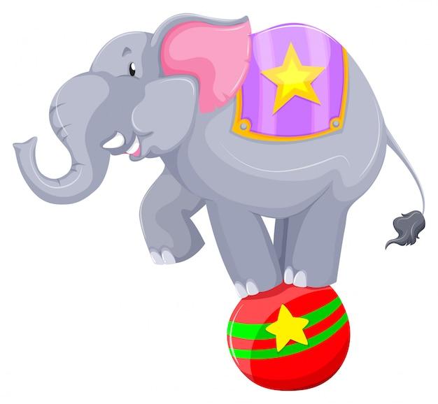 Grijze olifant balanceren op de bal