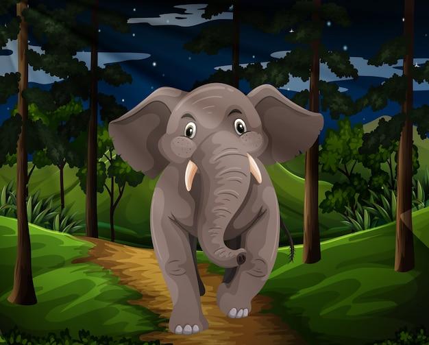 Grijze olifant die in het bos bij nacht loopt