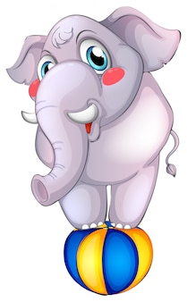 Grijze olifant op bal op wit