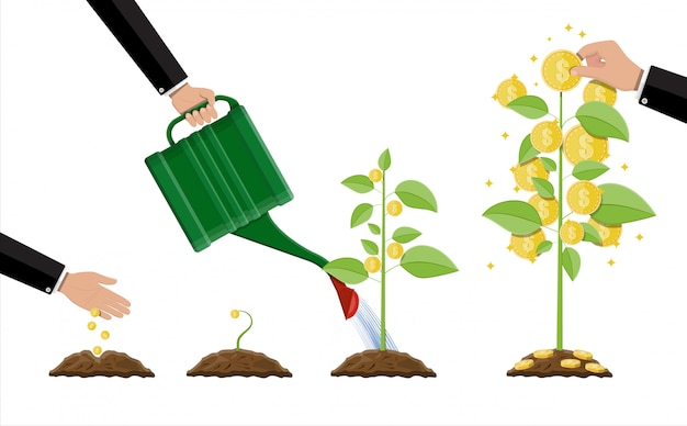 Groeiende geldboom. stadia van groei.