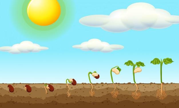 Groeiende plant uit zaad in de grond