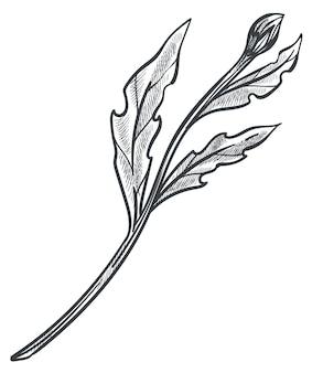 Groeiende plantbloem met knopstam en bladeren