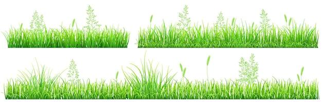 Groen gras en aartjes op witte achtergrond