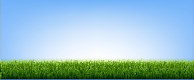 Groen gras grens en blauwe hemel