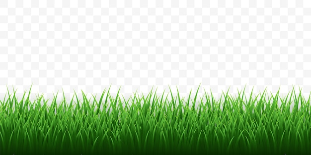 Groen gras grens ingesteld op transparante achtergrond.