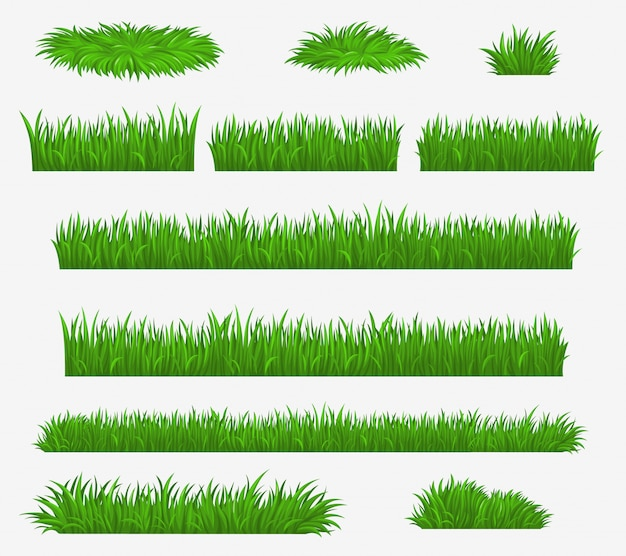 Groen gras, media en landbouwgrasveldbladen