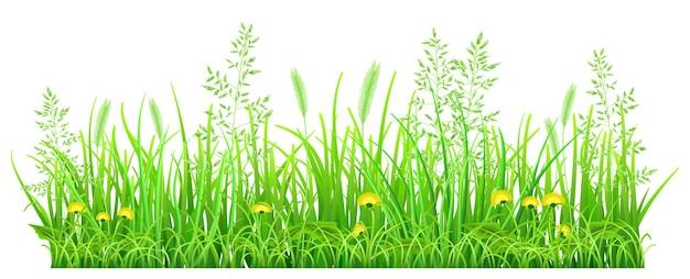 Groen gras met paardebloemen en aartjes op witte achtergrond