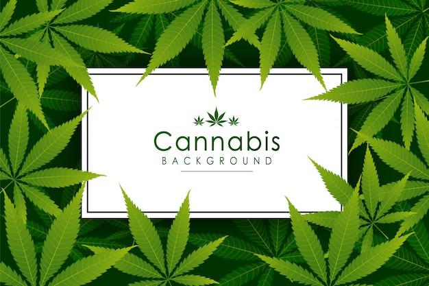 Groene cannabis blad drug marihuana kruid achtergrond. vector marihuanakader cannabis groen blad.