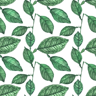 Groene citroen verlaat naadloze patroon