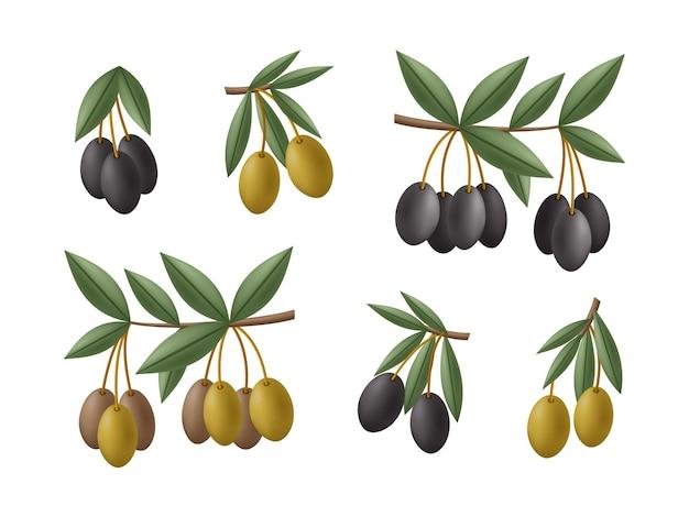 Groene en zwarte olijven takken set. illustratie