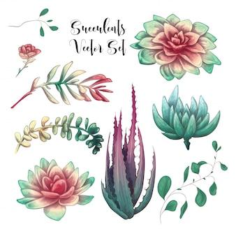 Groene kleurrijke succulente boeketten vectorontwerpvoorwerpen.