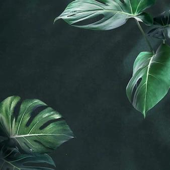 Groene monstera verlaat bron voor achtergrondontwerp