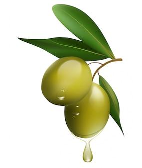 Groene olijftak die op witte achtergrond wordt geïsoleerd. realistische vectorillustratie