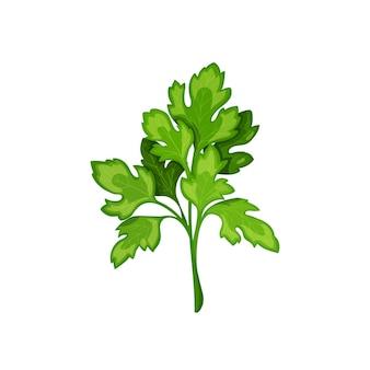 Groene peterselie, vegetarisch eten, gezond menu. kruidenkruiden, salade en maaltijden. geïsoleerde vectorillustratie in cartoon-stijl.