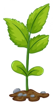 Groene plant groeit uit de grond