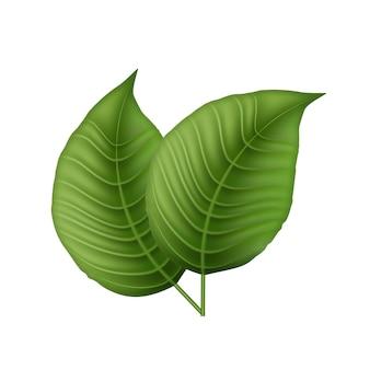 Groene realistische bladeren