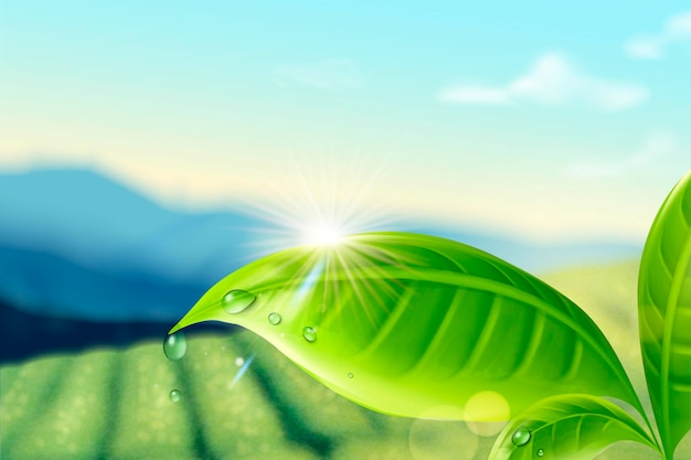 Groene thee plantage achtergrond
