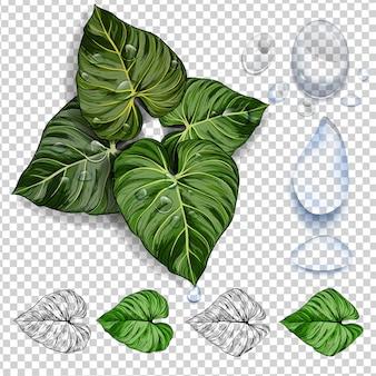 Groene tropische bladeren. grafisch ontwerp met verbazingwekkende palmen.