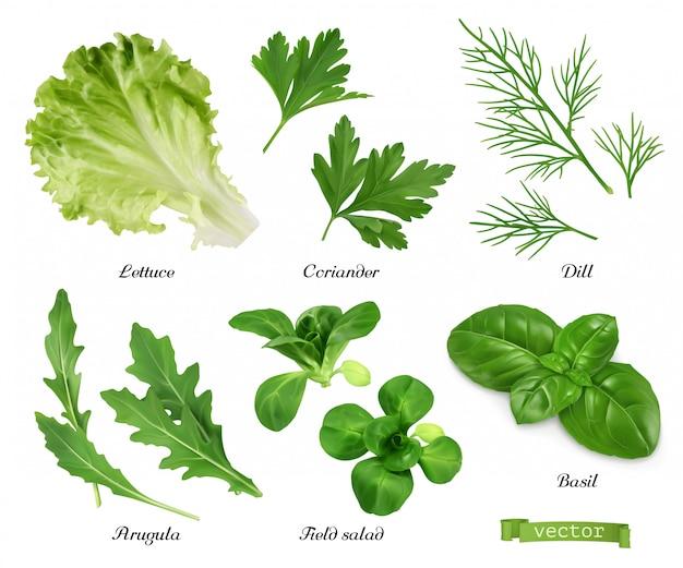 Groenen en specerijen. sla, korianderblaadjes, dille, rucola, veldsla, basilicum. voedsel illustratie