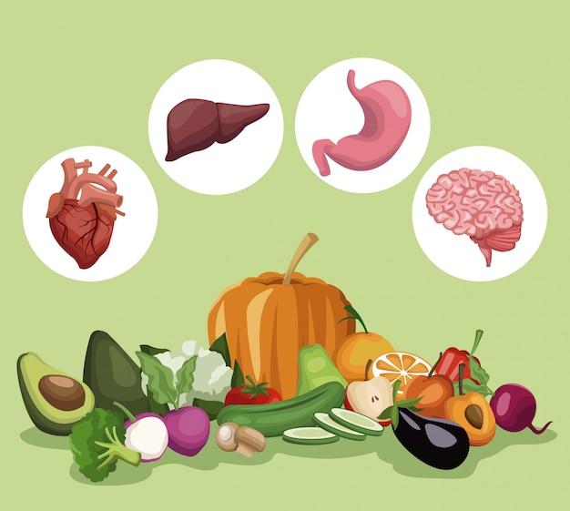 Groenten en fruit gezond voedsel set en organen menselijk lichaam
