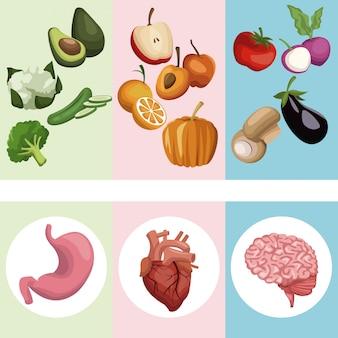 Groenten en fruit met organen menselijk lichaam