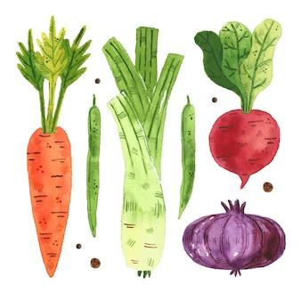 Groenten illustraties, set.