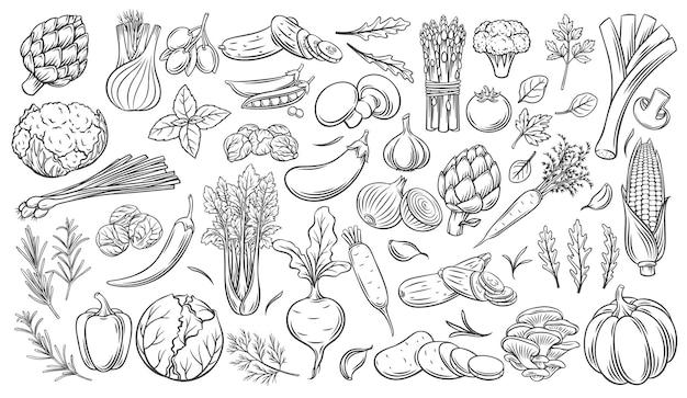 Groenten schetsen vector iconen set. monochroom artisjok, prei, keukenkruiden, maïs, knoflook, komkommer, paprika, ui, selderij, asperges, kool en ets.