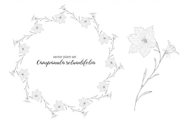 Groentenset van campanula rotundifolia.