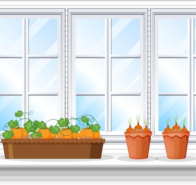 Groenteplanten met ramen