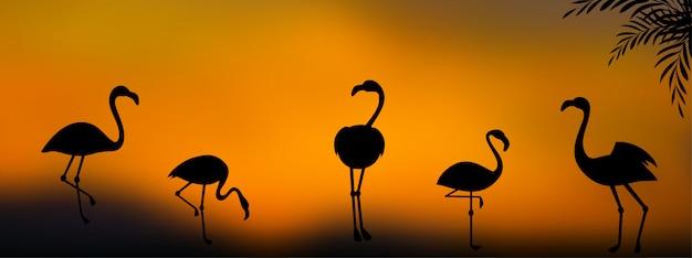 Groep flamingosilhouetten bij zonsondergangachtergrond