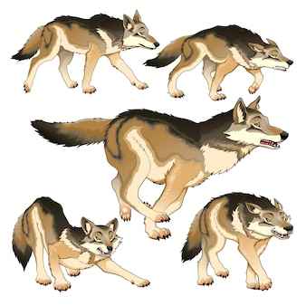 Groep geïsoleerde wolven vector illustratie
