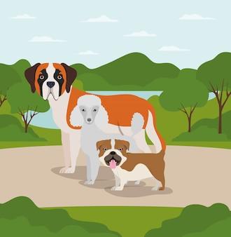Groep honden huisdieren in de kamp karakters