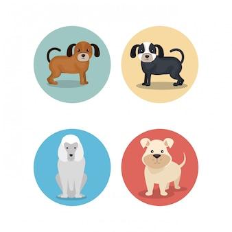 Groep hondenrassen