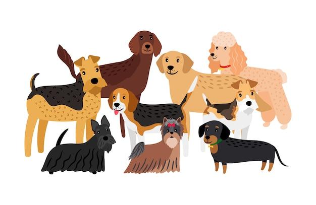 Groep jachthondenrassen