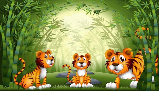 Groep tijger bij bamboebos