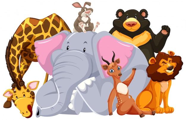 Groep van wilde dieren