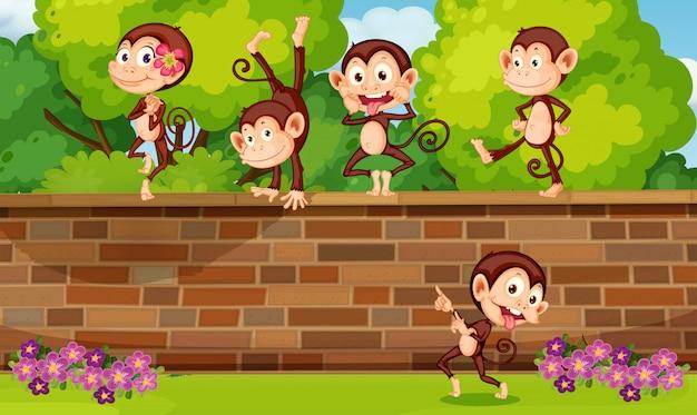 Groeps aap het spelen bij bakstenen muur