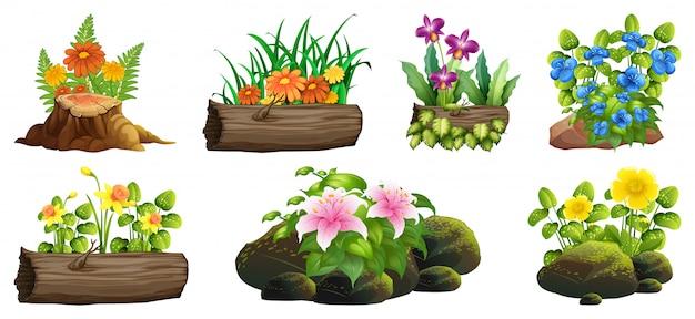 Groot aantal kleurrijke bloemen op rotsen en hout