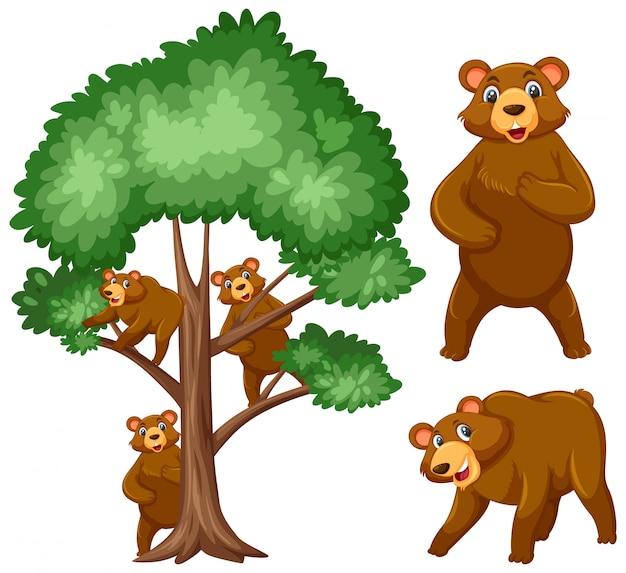 Grote boom en drie beren